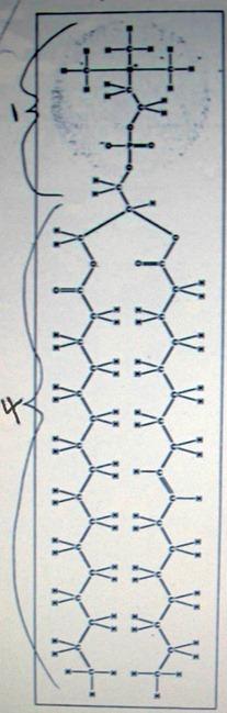 Амфипатическое строение жировой клетки с гидрофильной головкой и двумя одинаковыми гидрофобными хвостами